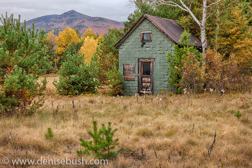 'Little Green House'  © Denise Bush