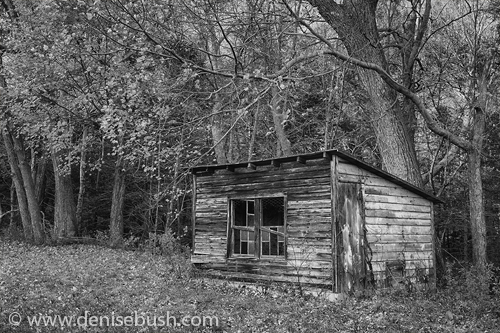 'Old Coop'  © Denise Bush