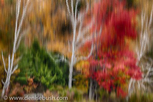 'Painterly Reflection'  © Denise Bush