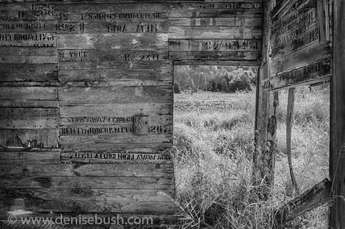 'Recycled Shack'  © Denise Bush