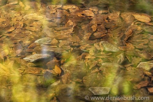 'Autumn Highlights'  © Denise Bush
