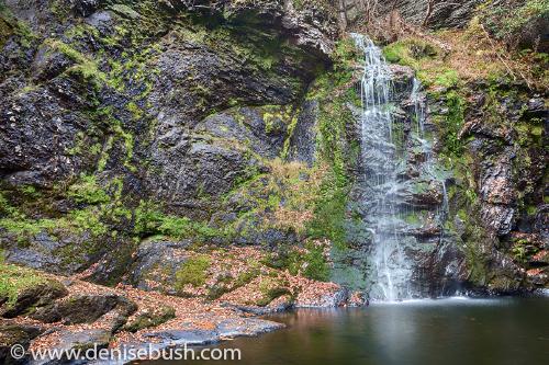 Delicate Falls'  © Denise Bush