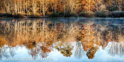 'Morning Reflection'  © Denise Bush