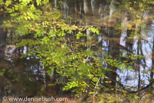 'Still Reflection'  © Denise Bush