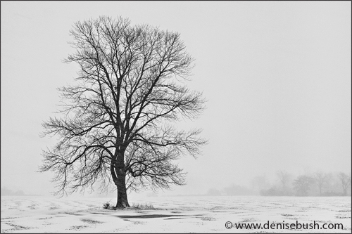 Tree In Blizzard I