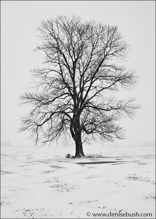 Tree In Blizzard II