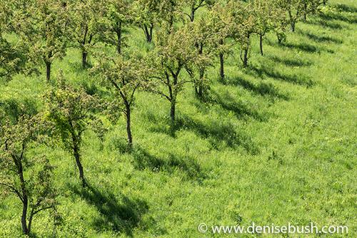 Orchard Below