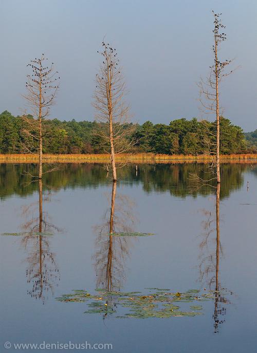 Three Trees With Birds