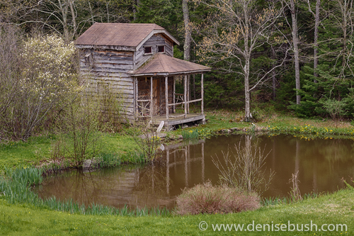 'Hillbilly Shack'  © Denise Bush