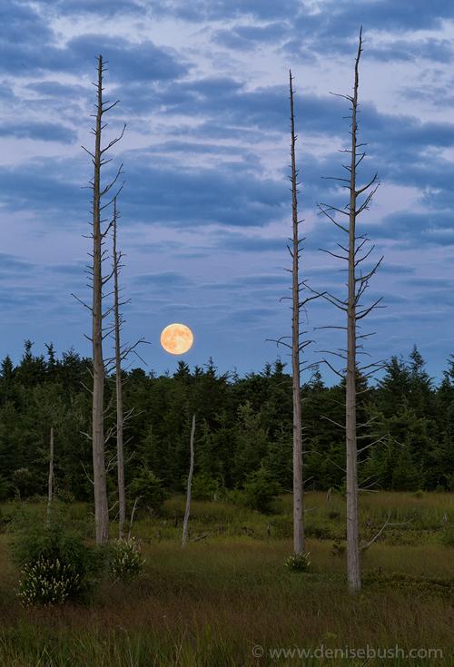 'Full Moon Rising'  © Denise Bush