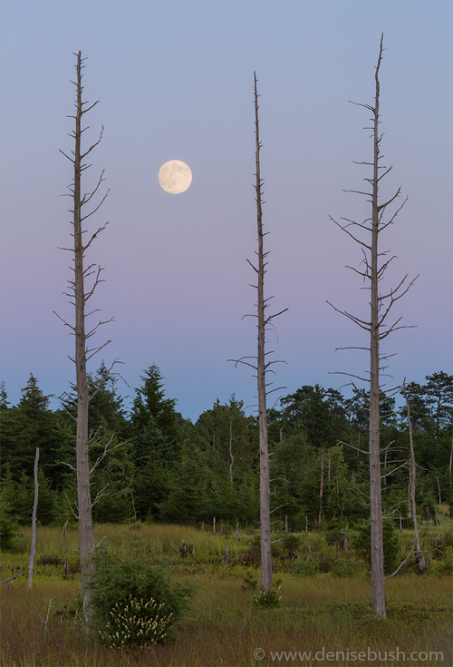 'Moon Before Nightfall'  © Denise Bush (Captured the night before the full moon.)