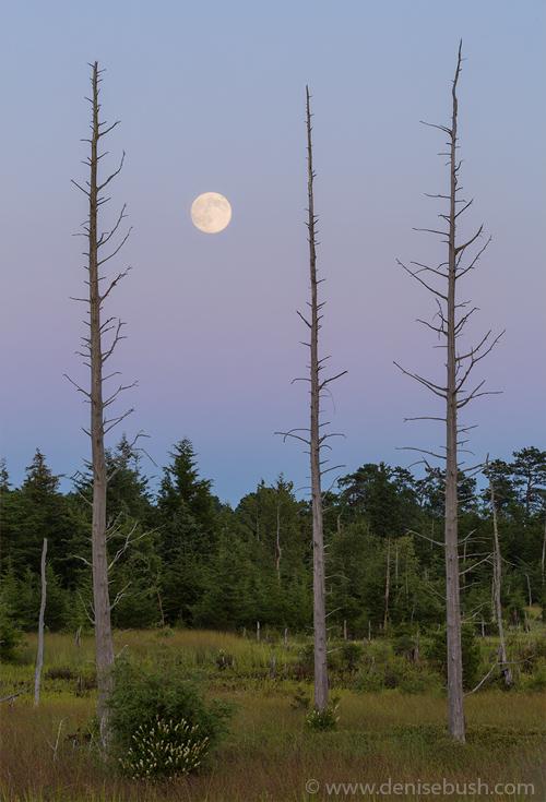 'Moon Before Nightfall'  © Denise Bush (Captured the night before the full moon.)