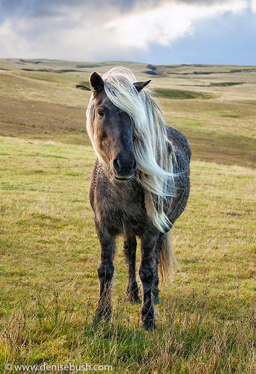 'Hairstyle No. 1'  © Denise Bush