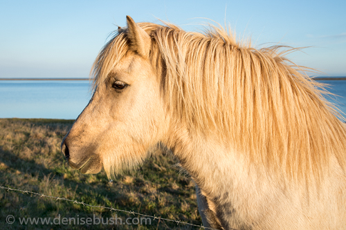 'Hali Horse'  © Denise Bush