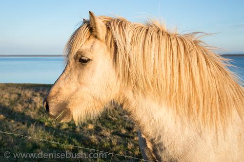 'Hali Horse'  © Denise Bush