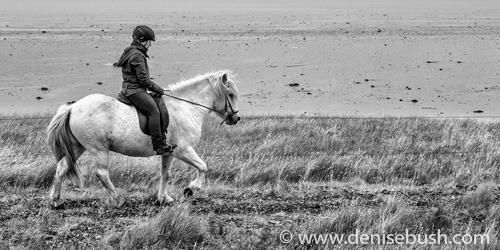 'Icelandic Horse & Rider'  © Denise Bush