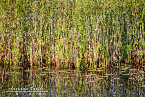 'Boggy Reflections'  © Denise Bush