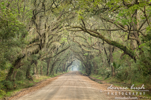 Live Oak Tunnel