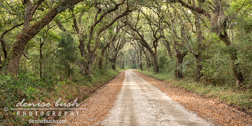 Low Country Road
