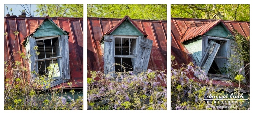 'Triptych Windows'  © Denise Bush (click to view larger)