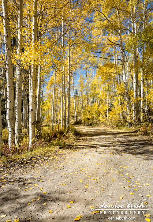 'Aspen Road' © Denise Bush