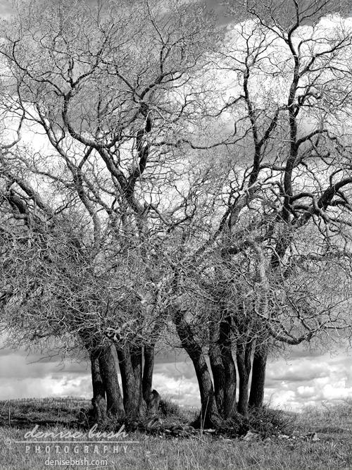 'Entwined' © Denise Bush