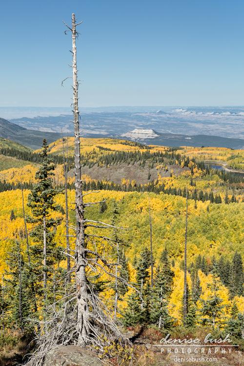 'Grand Mesa View' © Denise Bush