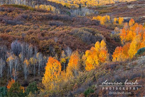 'Fall In Line' © Denise Bush