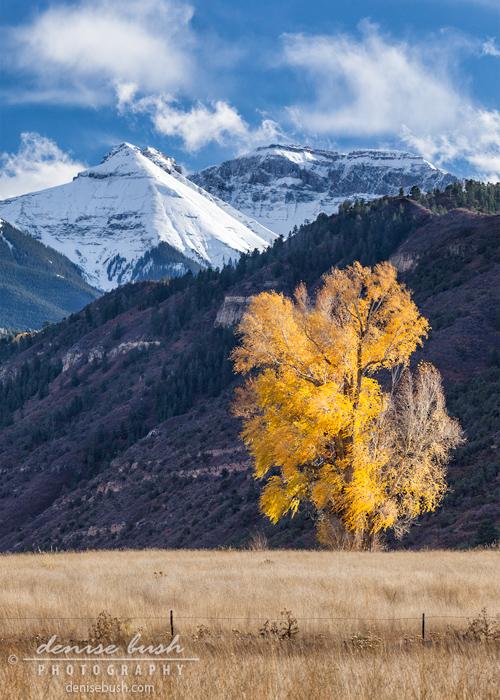 'Fall Into Winter' © Denise Bush