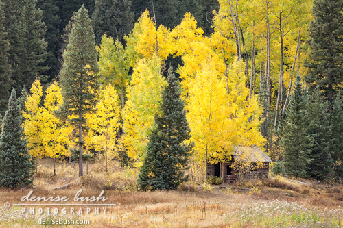 'Little Shack Among the Aspens' © Denise Bush