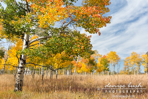 'The Colors of Fall' © Denise Bush click to view larger or order a print