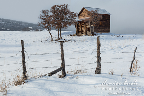 'Little Shack In The Snow' © Denise Bush