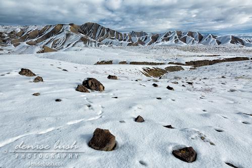 'Winter Tracks' © Denise Bush