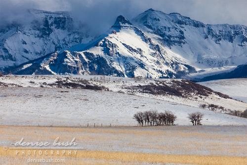 'Sun On Winter Field' © Denise Bush