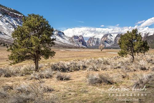 'Canyon Meadow' © Denise Bush