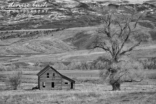 'Home On The Range' © Denise Bush