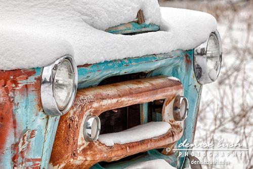 'Weathering The Storm III' © Denise Bush