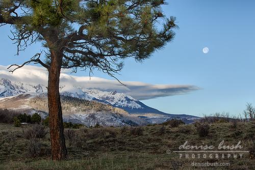 'Morning Moon' © Denise Bush
