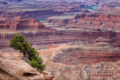 'Shaffer Canyon Detail' © Denise Bush