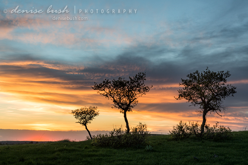'Three Trees On A Hill' © Denise Bush (click here to view larger or order a print)