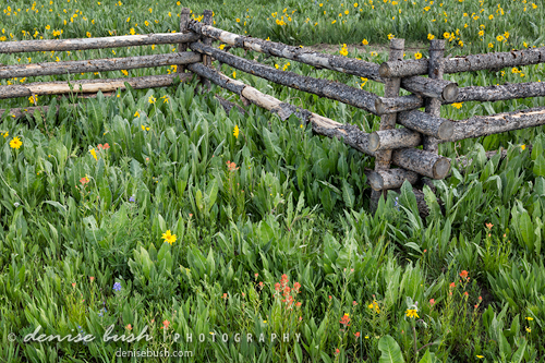 'Fence & Flowers' © Denise Bush