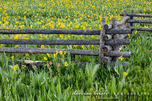 'Fenced In Flowers' © Denise Bush