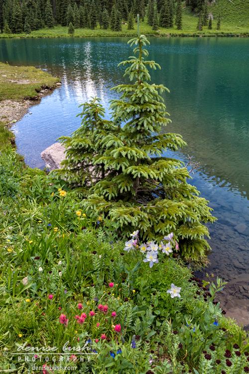 'Beside the Lake' © Denise Bush