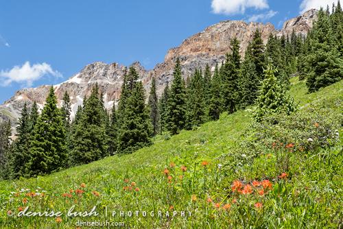 'Mountainside Meadow' © Denise Bush