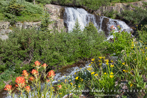 'Paintbrush Beside the Falls' © Denise Bush