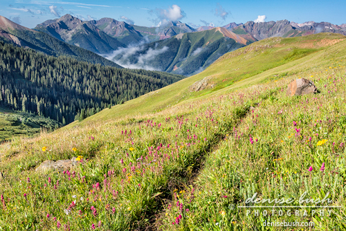 'Wildflower Trail' © Denise Bush