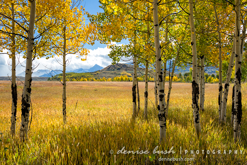 'Aspen Grove View' © Denise Bush