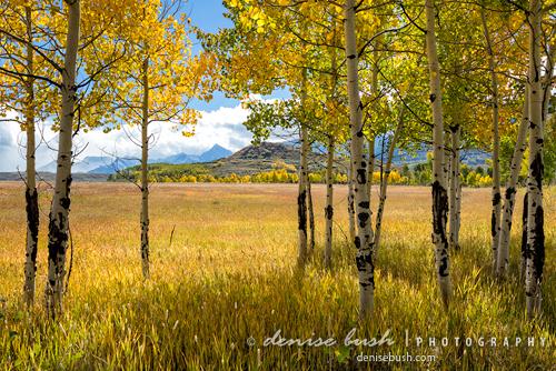 'Aspen Grove View' © Denise Bush