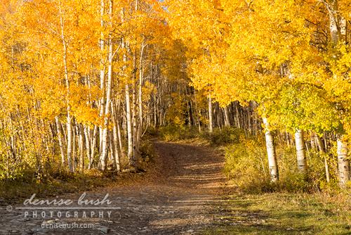 'Aspen Path' © Denise Bush