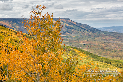 'Autumn On The Mesa' © Denise Bush